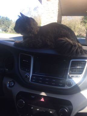 Lincoln The Roadtripping Cat